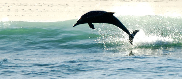 Whale & Dolphin watching in South Africa