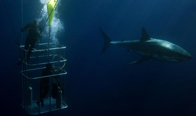Gansbaai: The Best Shark Cage Diving in South Africa