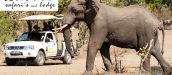 NSELE LODGE & SAFARI'S, HOEDSPRUIT